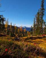 Fall larches Alpine Lakes WA