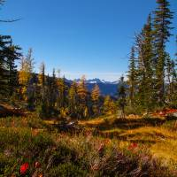 Fall larches Alpine Lakes WA Art Prints & Posters by Dennis Golden
