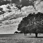 """Texas Tree"" by KPphotography"