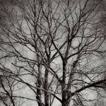 """Artistry Of Tree Branches Black And White"" by MissDawn"