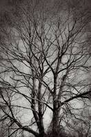Artistry Of Tree Branches Black And White