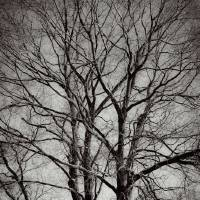 Artistry Of Tree Branches Black And White Art Prints & Posters by Dawn Mercer