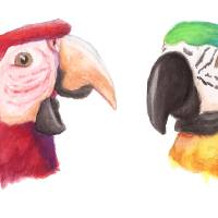 Two Macaws Art Prints & Posters by Laetitia Ulick