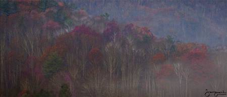 Colorful Trees in Fog