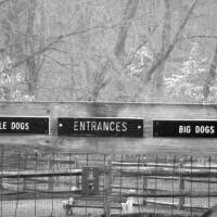 """Big Dogs Little Dogs Dog Park Sign"" by Kristen Stein"