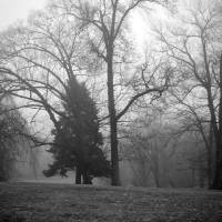 """foggy day trees"" by Kristen Stein"