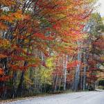 """Autumn Scenic Road In Acadia"" by George_Oze"