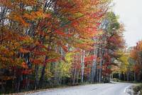 Autumn Scenic Road In Acadia