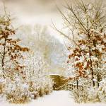 """""""Winter Woods"""" by JessicaJenney"""