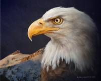 bald eagle portrait with mountain