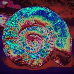 """Abstract Ammonite"" by PeteMoyes"