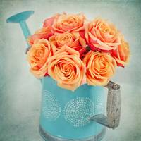 Bouquet of Orange Roses in a watering can