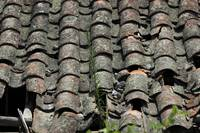 Terracotta Shingle Roof