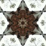 """image"" by sdreyerk1"