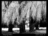 WHISPERING WILLOWS fine art print