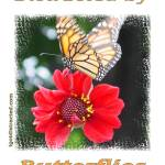 """Distracted by Butterflies 600-butterfly-dsc04167-d"" by quotes"
