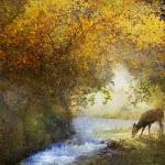 """deer by a woodland brook"" by rchristophervest"
