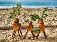 Three Reindeer on a Beach