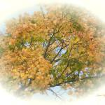"""""""GOLDEN LEAVES"""" by shaynaphotography"""