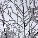"""Snow Branches Reaching Up"" by KsWorldArt"