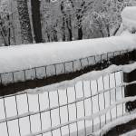 """Snow on a Fence"" by KsWorldArt"