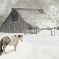 cherry creek barn and horse Art Prints & Posters by r christopher vest