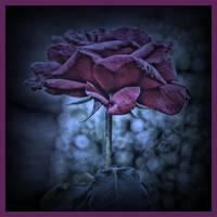 Purple Rose I