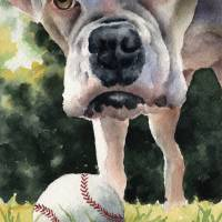 white boxer with ball (tcb) Art Prints & Posters by David Rogers