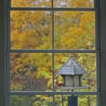 """Autumn Window with Cardinal"" by KsWorldArt"