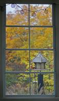 Autumn Window with Cardinal