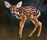 wobbly baby fawn deer portrait
