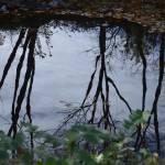 """Fall Reflections"" by TaylorMadeArt.US"