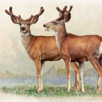 laughing brothers, young bucks in velvet Art Prints & Posters by r christopher vest