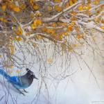 """snowy branches stellar jay"" by rchristophervest"