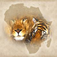 Out of Africa Art Prints & Posters by Bob M