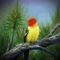 Western Tanager Art Prints & Posters by Rich Summers