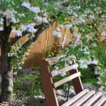 """Garden Flowers Snowdrop Tree"" by vpicks"