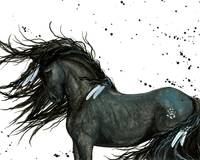 White Feather Friesian