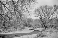 Winter Creek in Black and White