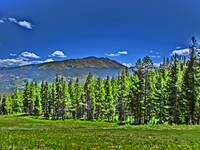 Vibrant Breckenridge Colorado forest print