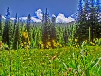 Vibrant scenic Colorado flower field forest print
