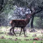 """Free deer"" by Lorenzo_Salas"