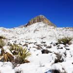 """Desert Snow"" by SylviaClaiborne"