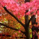"""""""Fall Glory"""" by TaylorMadeArt.US"""