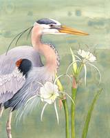 Great Blue Heron and Spider Lilies