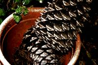 pine cones in plant pot