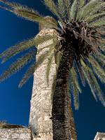 palm and minaret in Jaffa