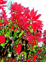 tropical red plant