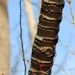 """Tree Rings"" by KsWorldArt"