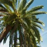 """Royal Palm"" by jkphotos"